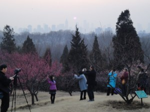 Plum blossom viewing in a park outside Nanjing in January 2011.
