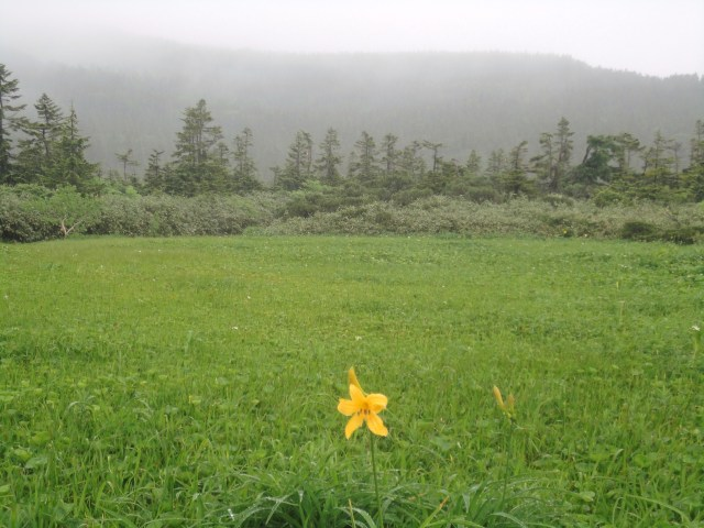 The rainy season in Iwate`s highlands, June 2012.